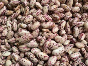 خرید لوبیا چیتی عمده مرغوب با کیفیت