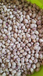 خرید لوبیا چیتی عمده امسال